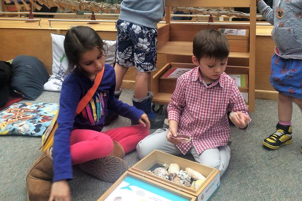 Family Activities at Natural History Museum