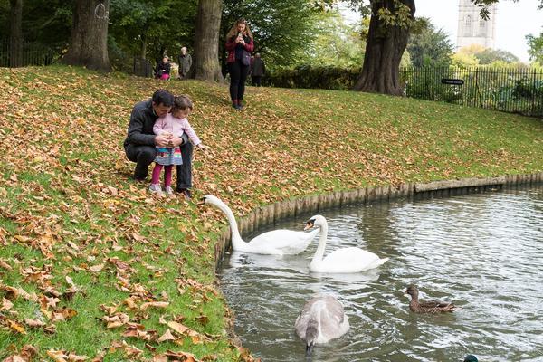Feeding the Swans in Christ Church Meadows